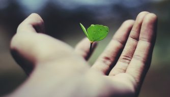 Third Culture Africa How To Recognise Personal Development And Growth a hand in a black background holding a green growing plant